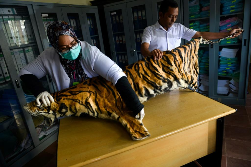 Tigers -- thought to number just 22 in Myanmar -- can now be bred for their meat and skin