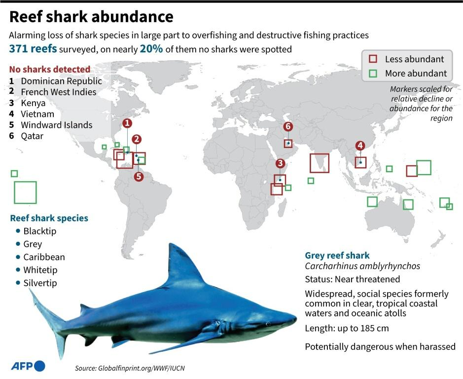 Graphic showing areas where reef sharks are increasing, and areas where they are decreasing, according to a new study