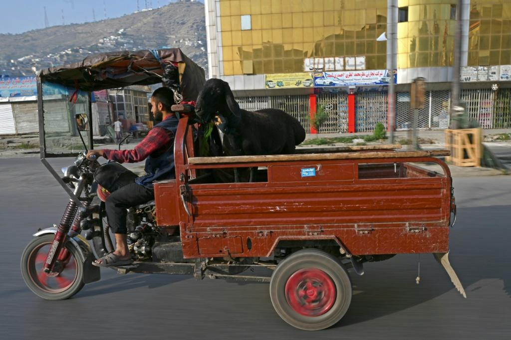 A man transports a sheep during the Muslim festival of Eid al-Adha, in Kabul