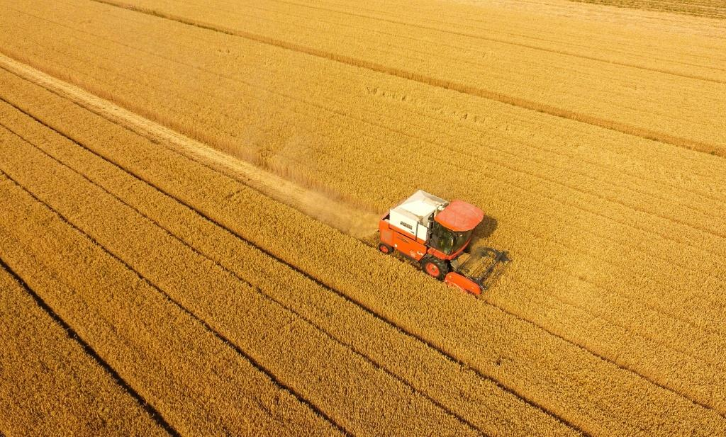 Officials have repeatedly said 'all-is-well' and promise a bumper 2020 grain crop there are growing concerns about a food shortfall
