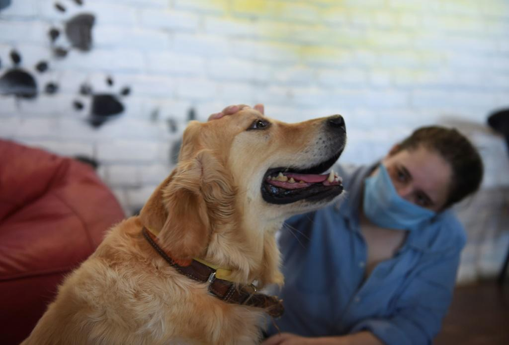 There is a growing number of people across India adopting dogs to cope with the loneliness inflicted by the pandemic