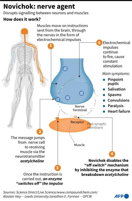 Factfile on how Novichok and other nerve agents work to disrupt messaging between neurons and muscles