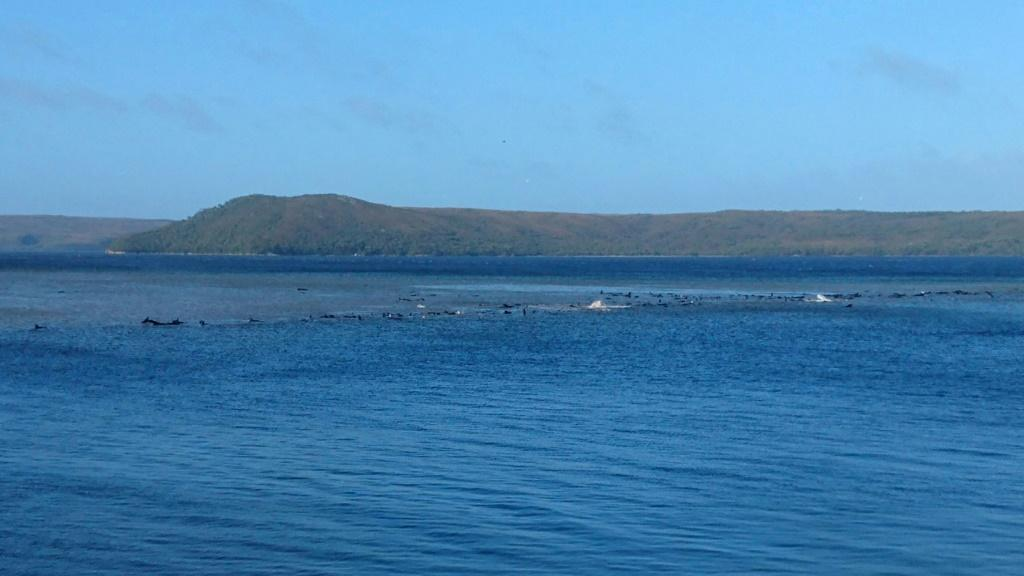 The whales are believed to be stranded on a sandbar