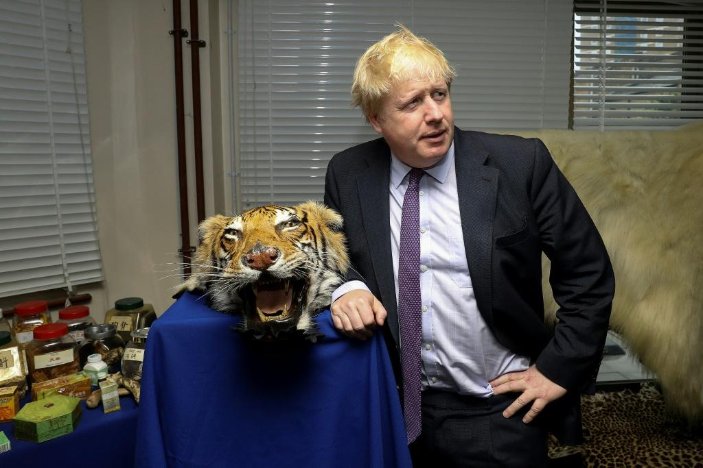 Britain's then foreign secretary Boris Johnson with a seized tiger skin rug in London in 2018