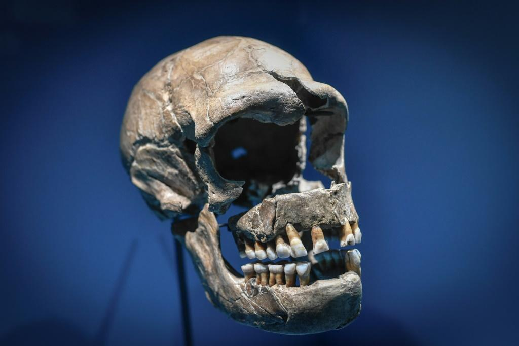 People infected with Covid-19 who carry a specific snippet of genetic coding bequeathed by Neanderthals are three times more likely to need mechanical ventilation