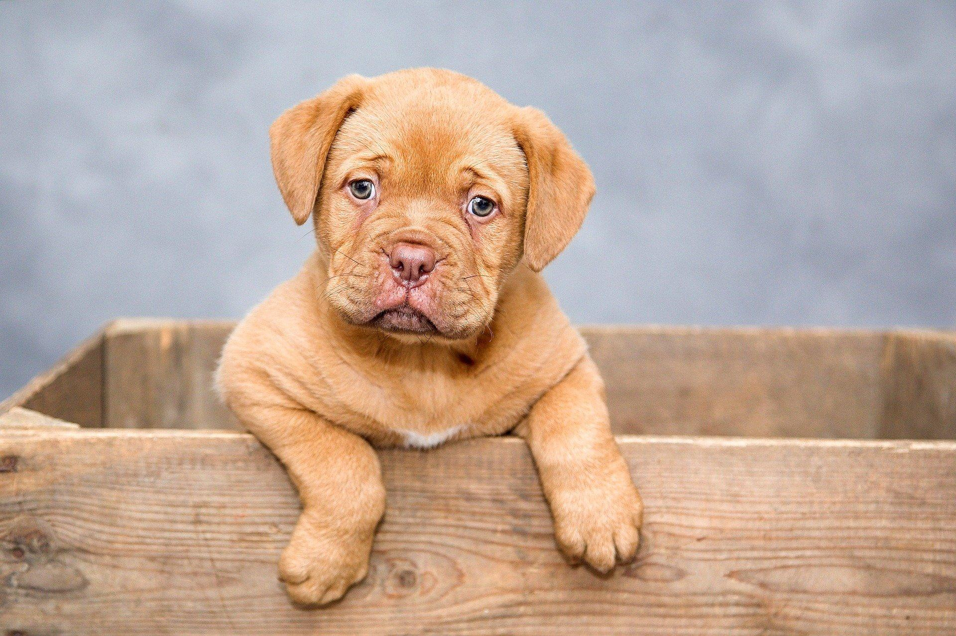 Top 18 Reasons To Choose Small Dog Breeds Over Big Ones