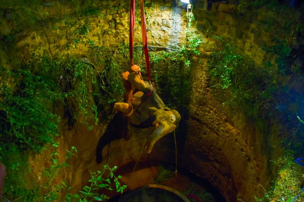 The elephant was sedated before rescuers climbed into the well and attached straps to its feet