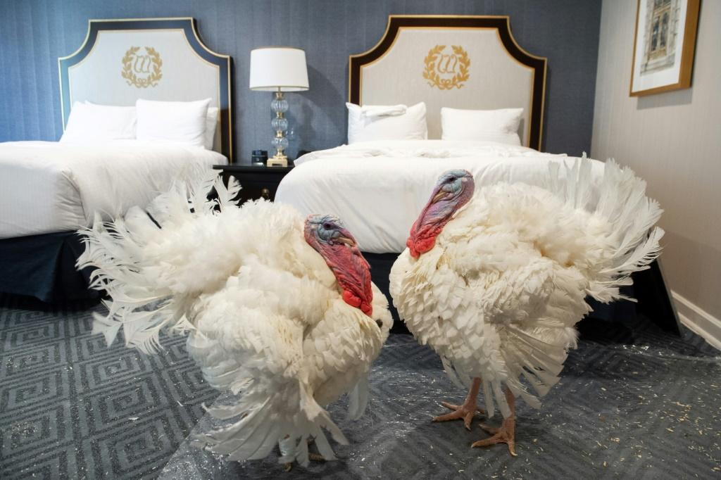 Corn and Cob, a pair of turkeys that will be pardoned by US President Donald Trump