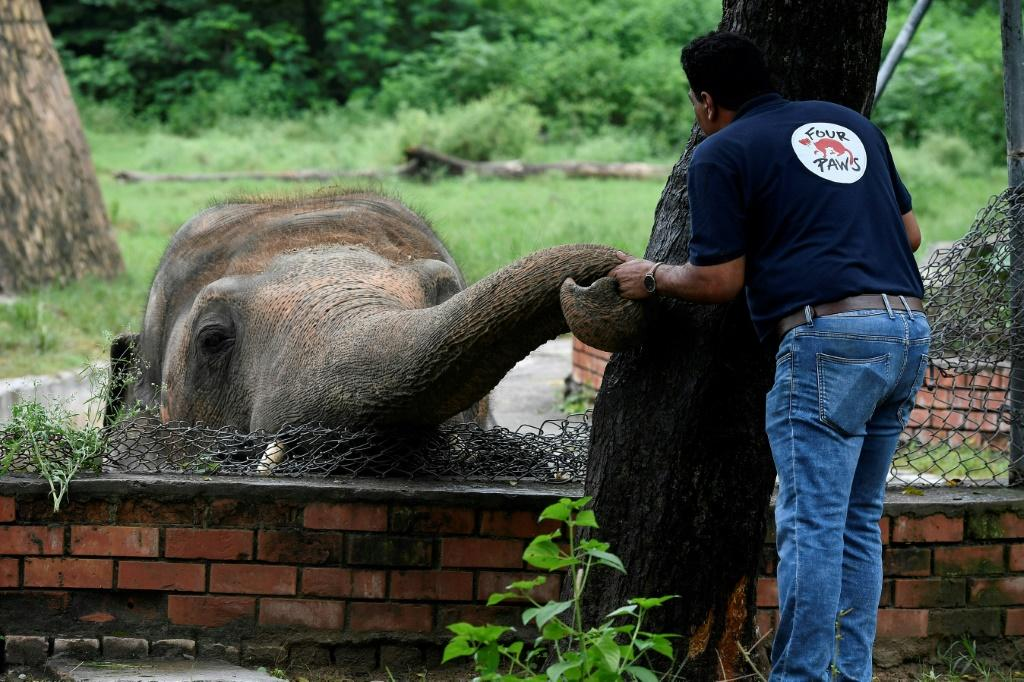 A team of vets and experts from Four Paws have spent months working with Kaavan to get him ready for the trip to Cambodia