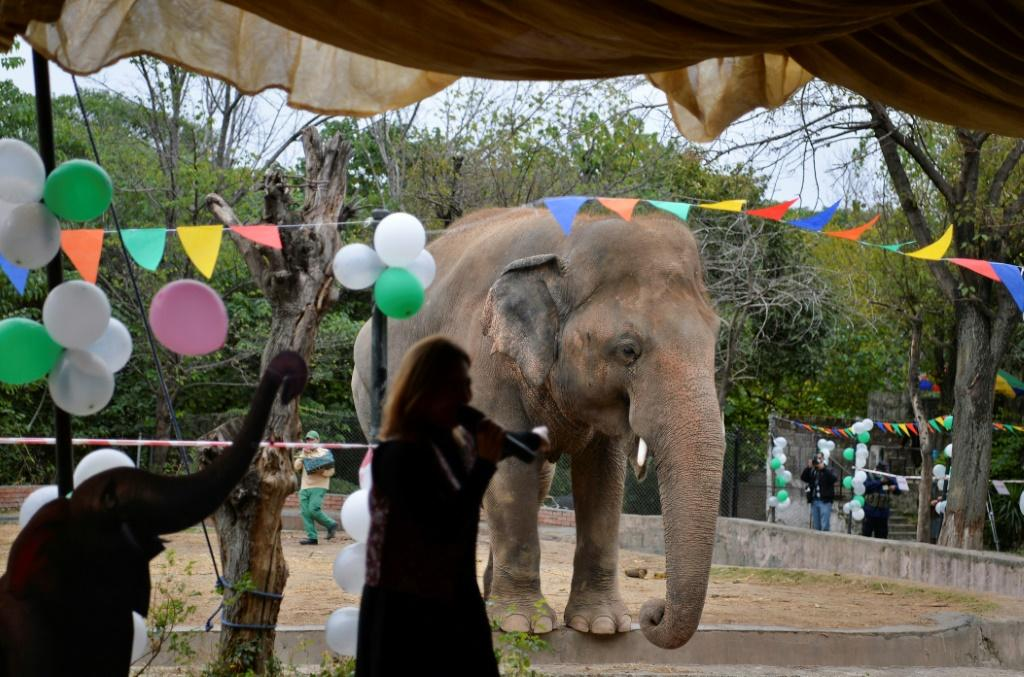 Kavaan, 'the world's loneliest elephant' is heading to a sanctuary in Cambodia following a social media campaign by US pop star Cher