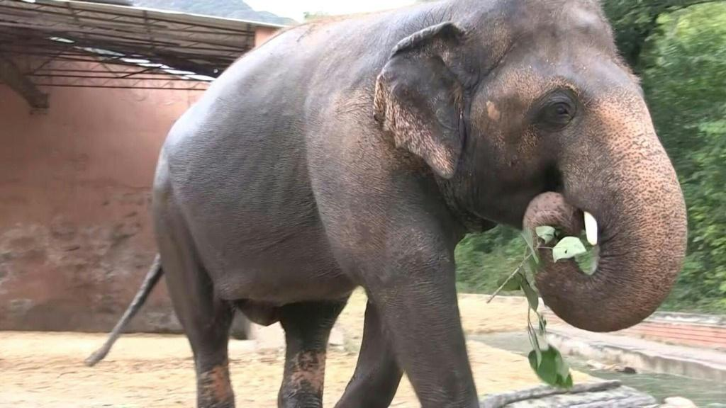 With musical performances and heartfelt messages, Pakistanis said their final goodbyes to the country's only Asian elephant ahead of a planned move to Cambodia following a years-long campaign by animal rights activists for his relocation.