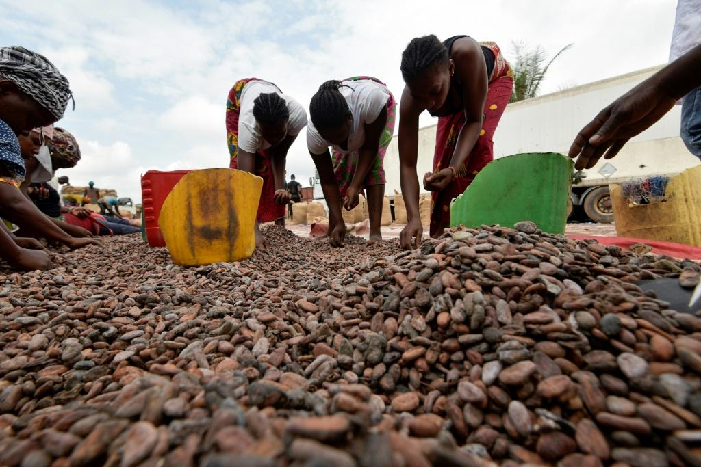 Women sort cocoa beans in Ivory Coast on July 3, 2019
