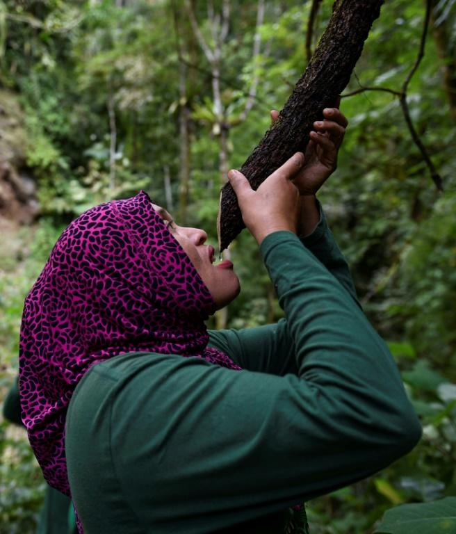 The women set out into the jungle twice a month, for about five days at a time