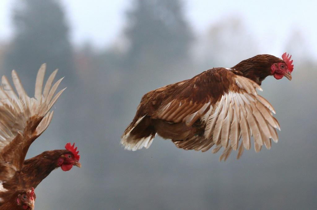 H5N8 is lethal for birds, but it had never before been reported to have spread to humans