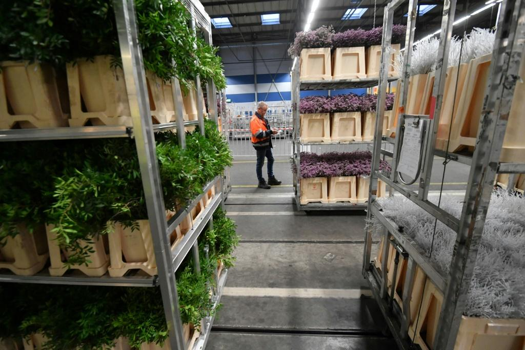 Boutemy is horrified by the 'industrial' flower trade at venues like FloraHolland in the Netherlands