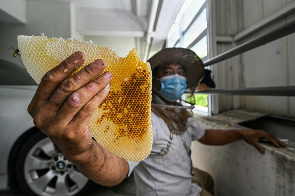 What A Buzz: Saving Malaysia's Bees, One Nest At A Time