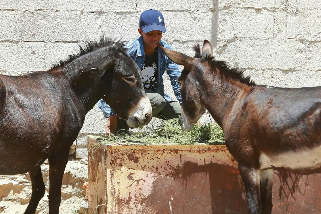 Jordanian donkey owner AbdulrahmanAli brings his animals to a clinic supported by the animal rights group PETA, where vets treat maltreated and malnourished donkeys for free