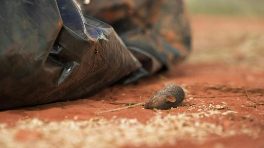 Farmers are fighting a catastrophic months-long mouse plague in eastern Australia, amid fears the rodents will survive winter and boom again in warmer months.