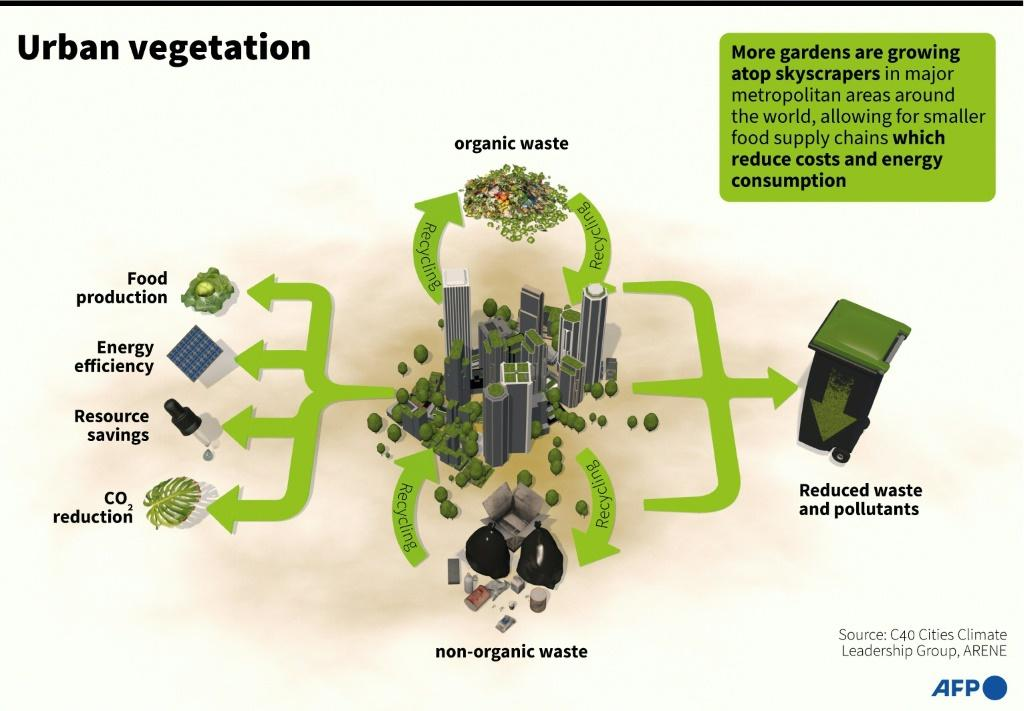 Advantages for cities transforming their concrete jungles with rooftop agriculture and vertical farms