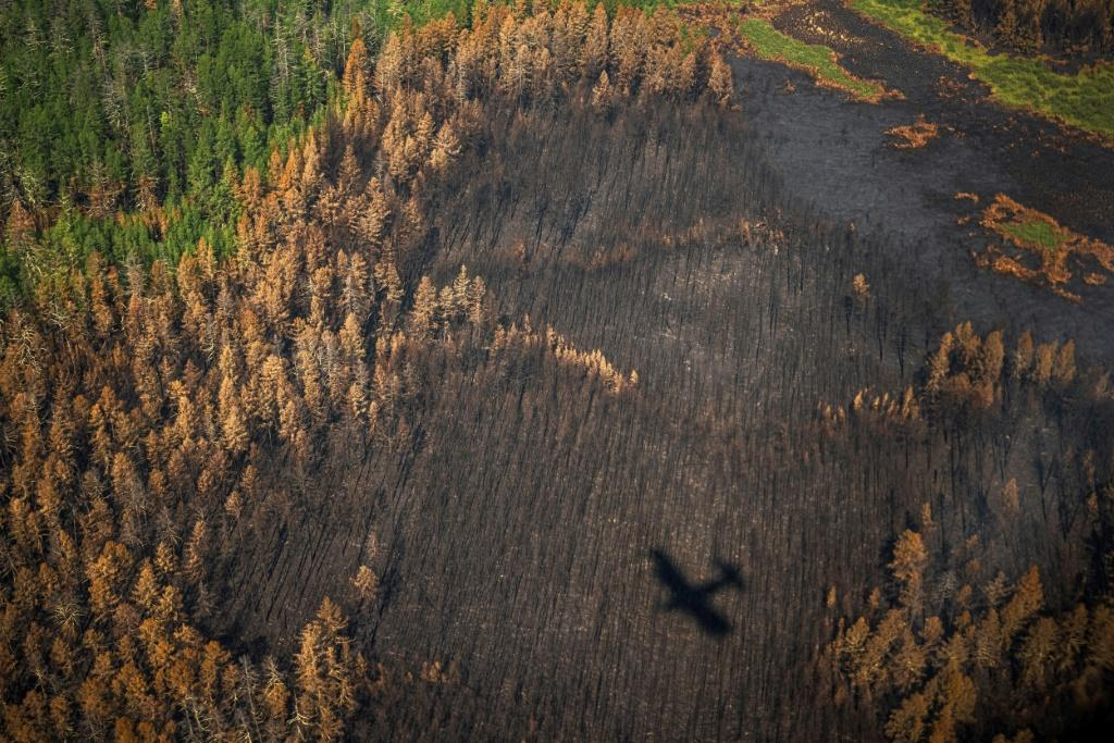 'If we weren't around, everything would burn,' says Yegor Zakharov, a brigade leader with Russia's Aerial Forest Protection Service
