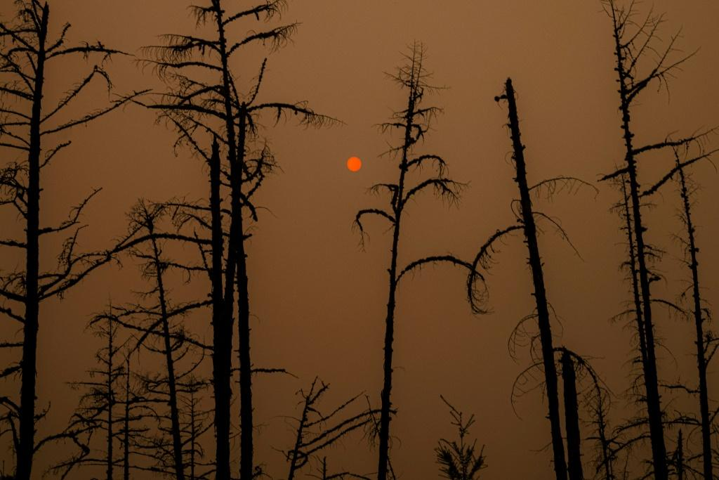 With more than a month still to go in Siberia's annual fire season, more than 1.5 million hectares (3.7 million acres) of Yakutia's swampy coniferous taiga has already been lost