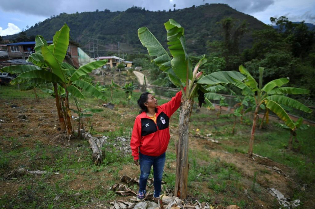 For the second year in a row, Colombia -- home of indigenous environmentalist Celia Umenza, picture in Tacueyo -- was the country with the highest number of people killed for their defense of nature, according to rights group Global Witness