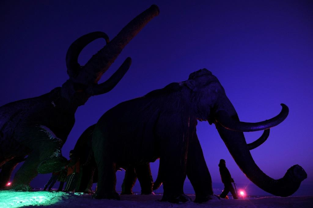 Woolly mammoths may yet walk the Arctic again, if biosciences firm Colossal is able to use gene-editing techniques to bring back the extinct species