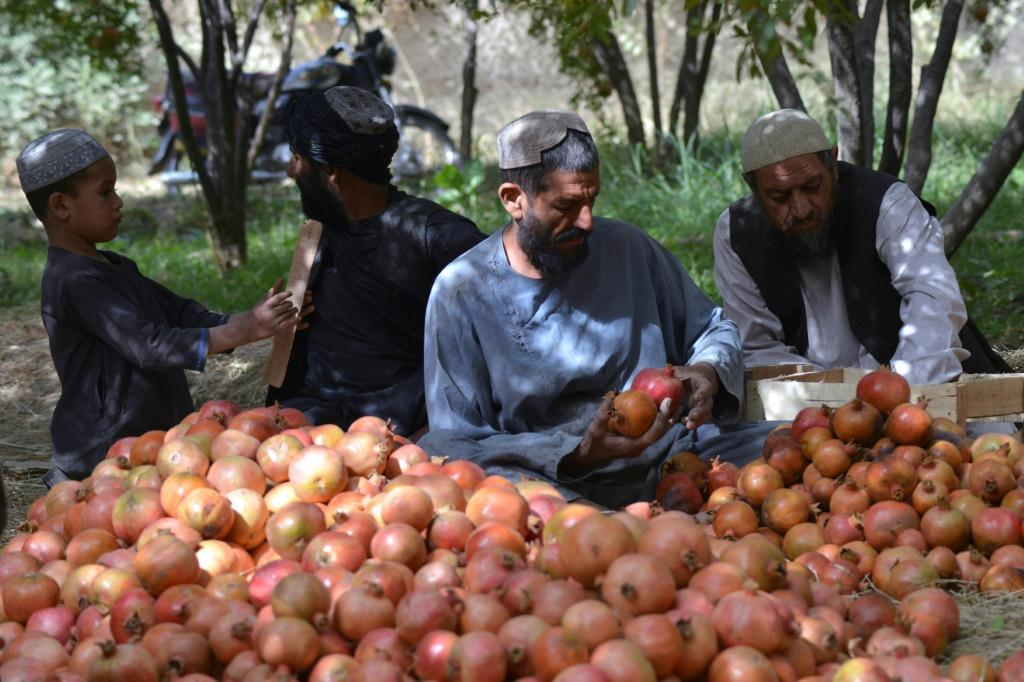 Frequent border issues with Pakistan mean thousands of tonnes of pomegranates are at risk of rotting on trucks