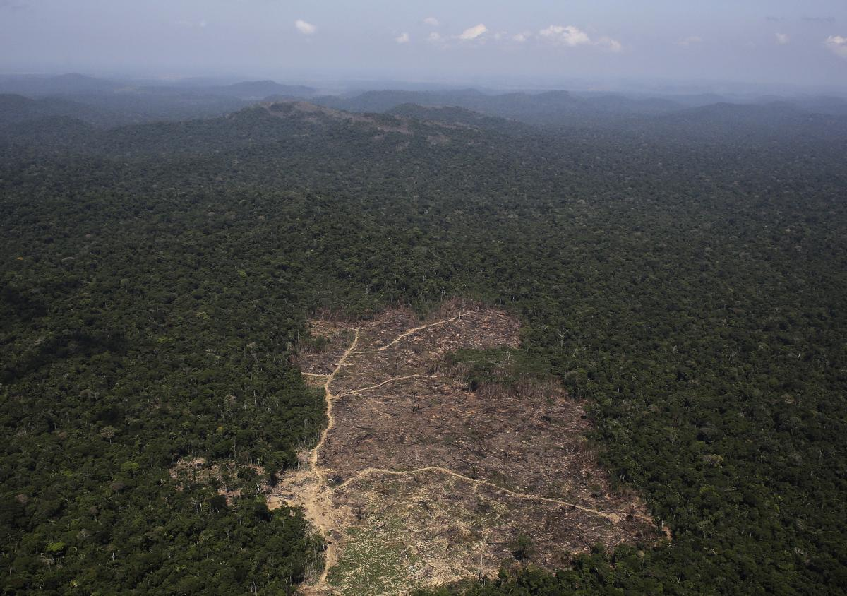 Rampant Deforestation In Amazon Jungle May Be The Cause Of Brazil's Devastating Drought