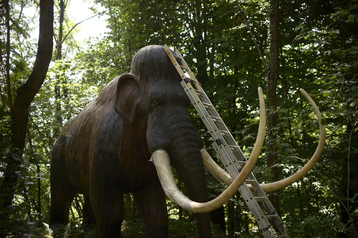 Woolly Mammoth Genome Sequence Completed: Details About Extinction Revealed, Cloning Made Easier