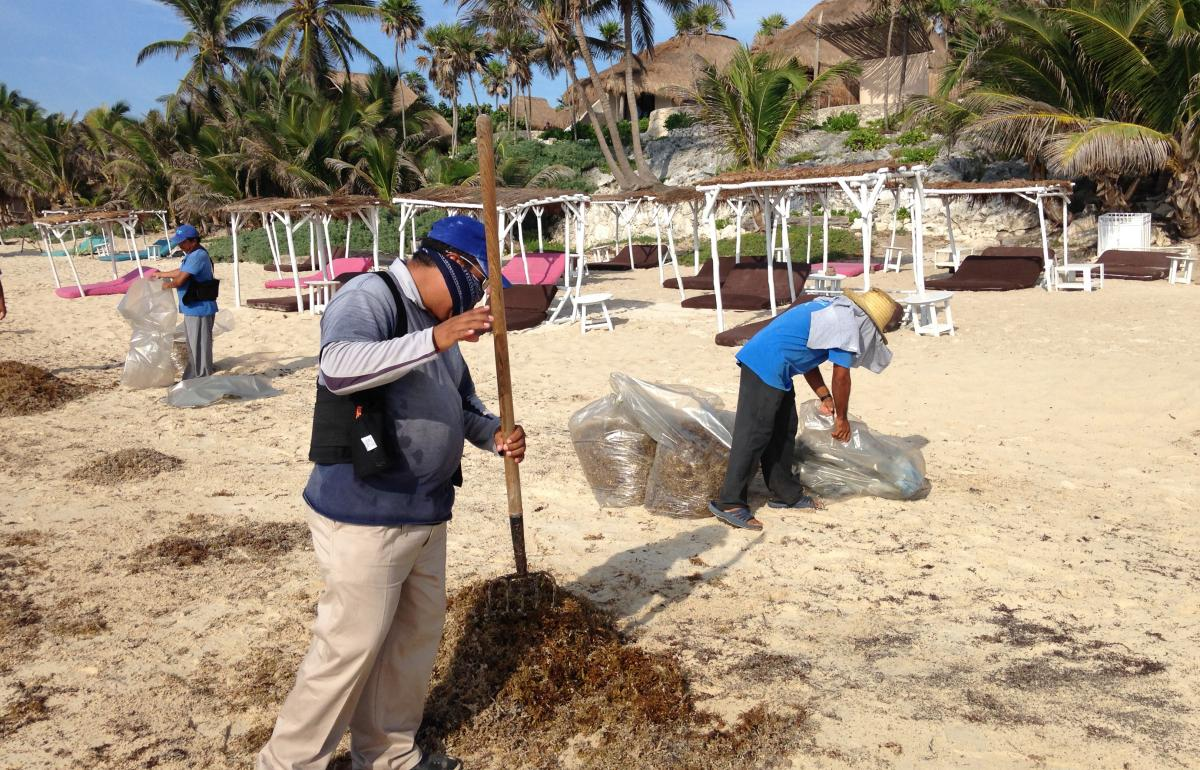 Sargassum Seaweed Invasion Threatens Mexico Tourism As Word of Mouth