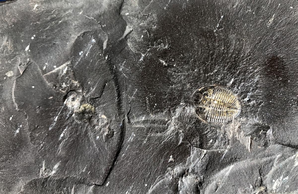 What Triggered The Cambrian Explosion? Fossil Fuel Formation, New Study Says