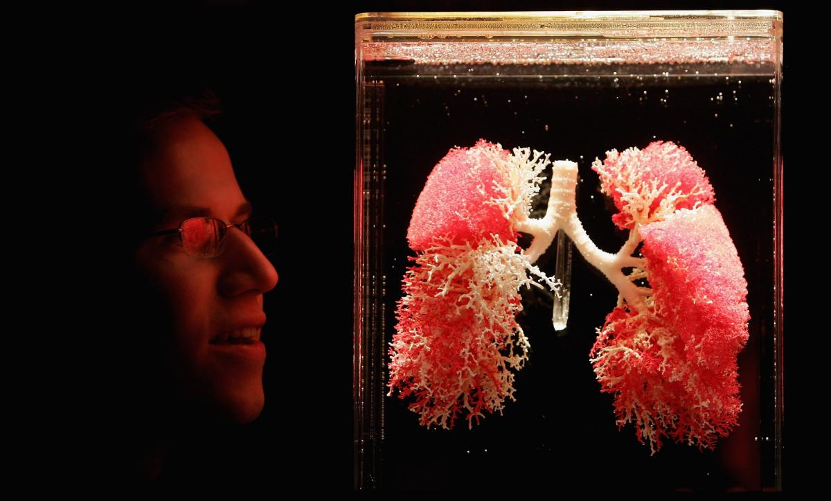 What Do Lungs Do? Help Us Breathe And Maybe Even Produce Blood