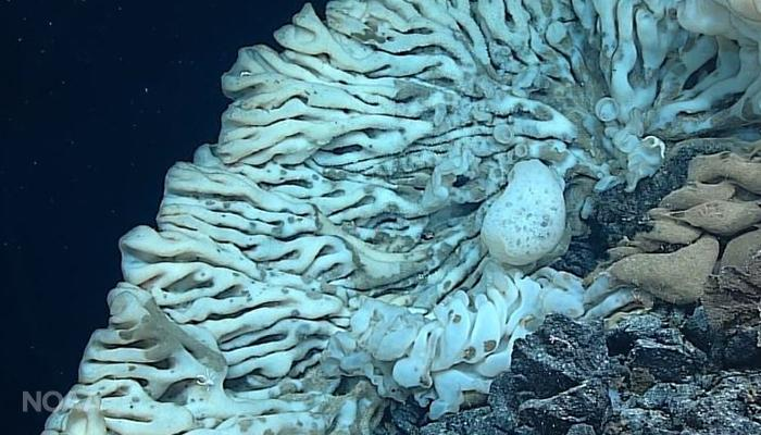 These Wild Sea Creatures Were Found By NOAA During Years Of