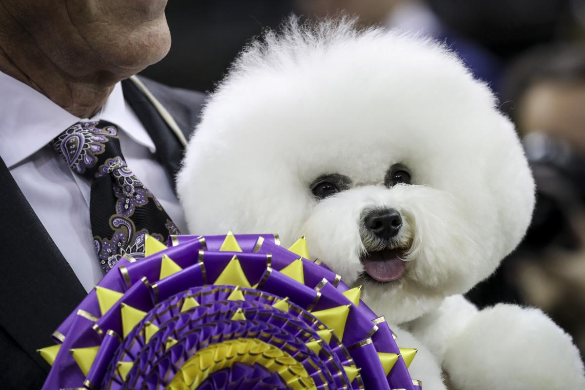 How To Watch Beverly Hills Dog Show 2018 On Tv Or Online