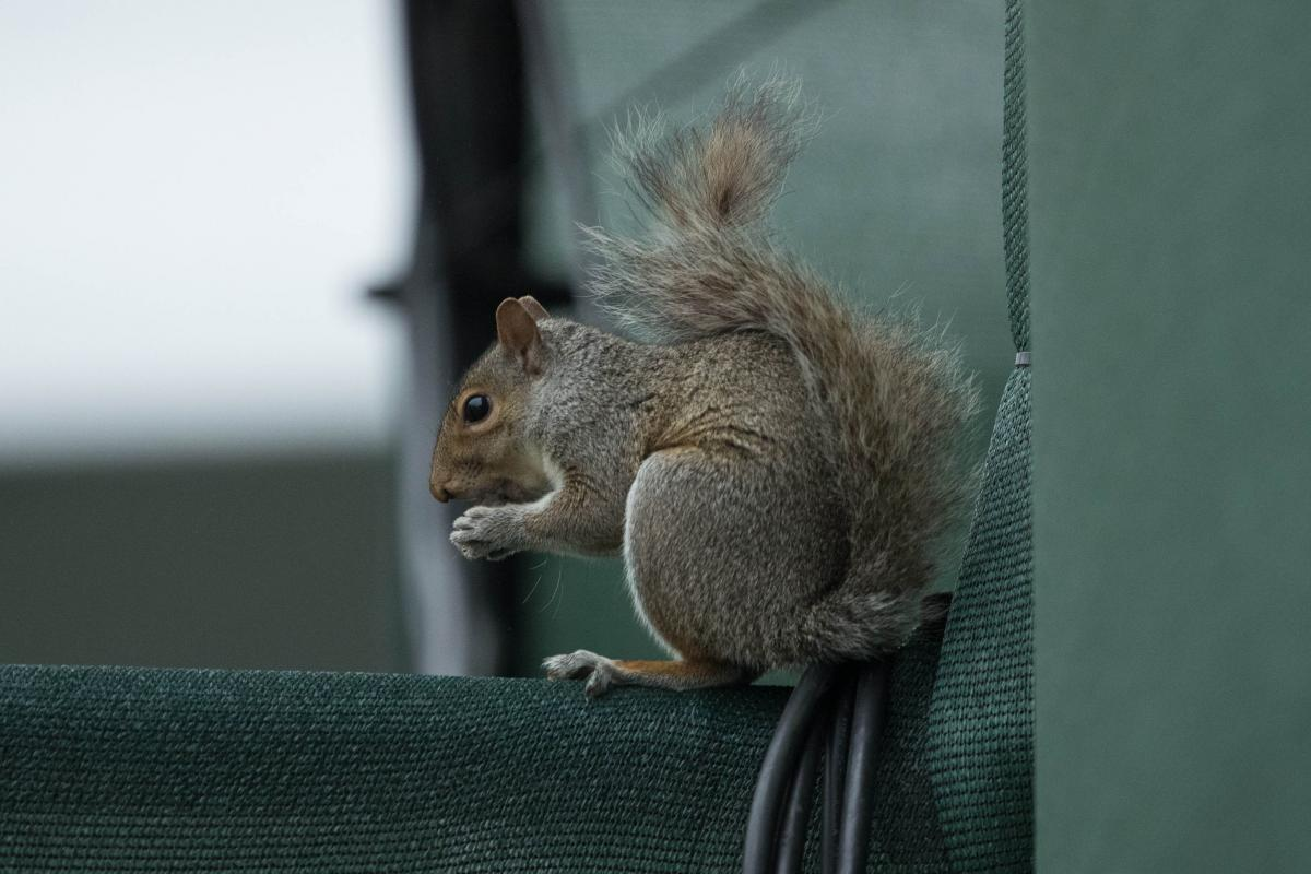 How Many Cars In The World >> Watch: Hungry Squirrel Steals Cop's Doughnut In Viral Video