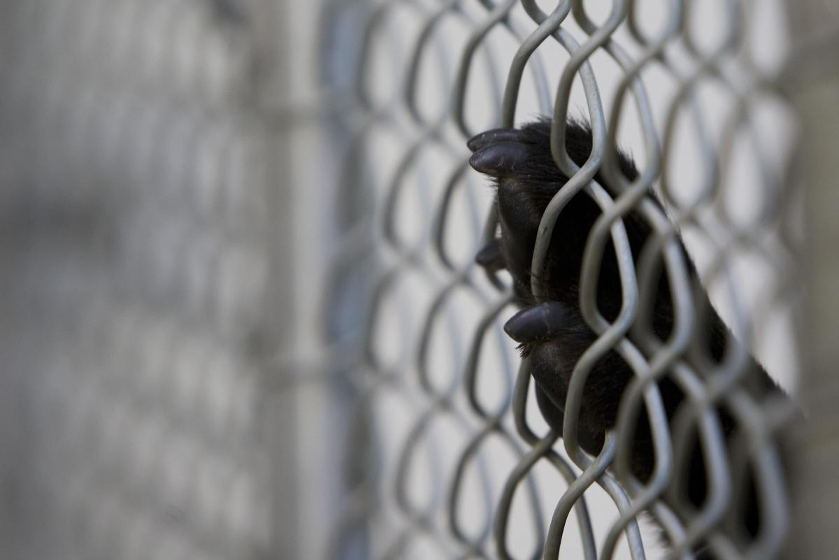 Dogs Left Bleeding, Monkeys Strapped To Metal Harnesses, Other Animals 'Kept In Camped Conditions' At Laboratory