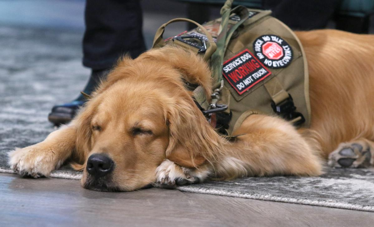 What Service Animals Are Allowed On Planes? DOT...