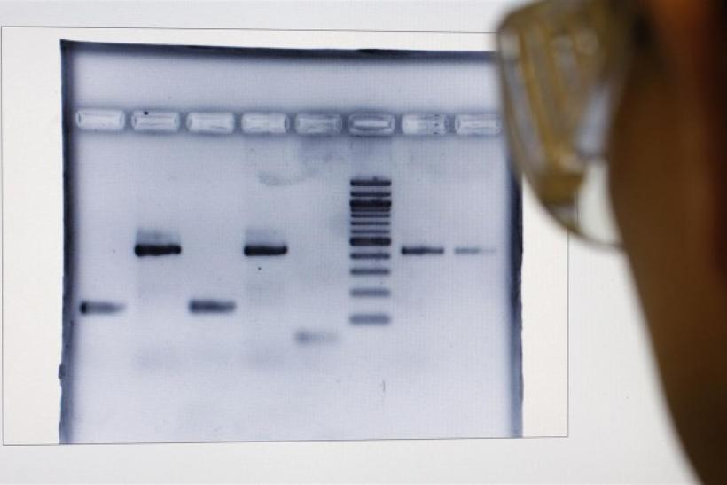 Senior scientist Murat looks at DNA fingerprints of truffles at a laboratory of the INRA in Champenoux near Nancy