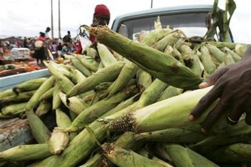 A vendor sells green maize on a truck in Hatcliff neighbourhood, outside Zimbabwe's capital Harare