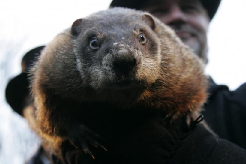 What will Punxsutawney Phil predict for 2012?
