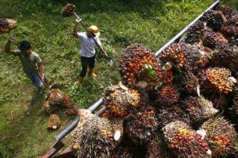 Analysis: Price boom puts palm oil on emerging markets' radar