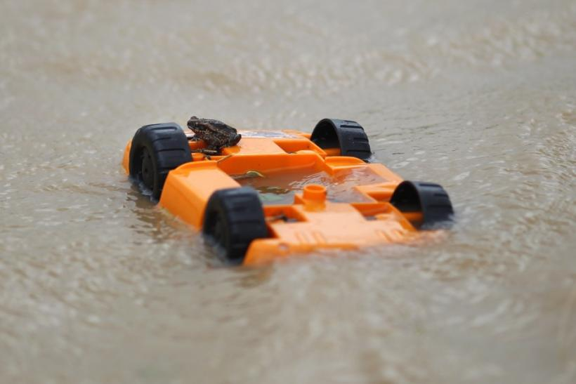 Toad sits on a child's toy amidst flood waters after Cyclone Yasi passed, in the northern Australian town of Cowley Beach