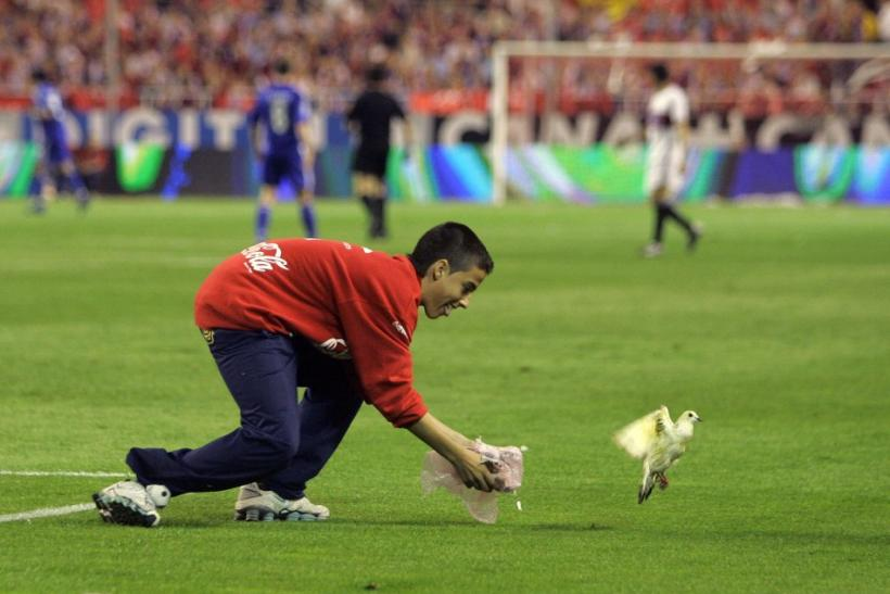 Boy tries to catch bird on field during Sevillas UEFA Cup match against Schalke 04 in Seville