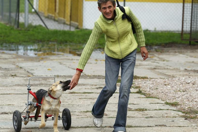 Ciuchcia (Steam train engine), a four-month-old dog, runs after a staff member in a courtyard after being helped onto a specially made wheelchair at Schronisko (Shelter), a shelter for homeless animals, near Piotrkow Trybunalski