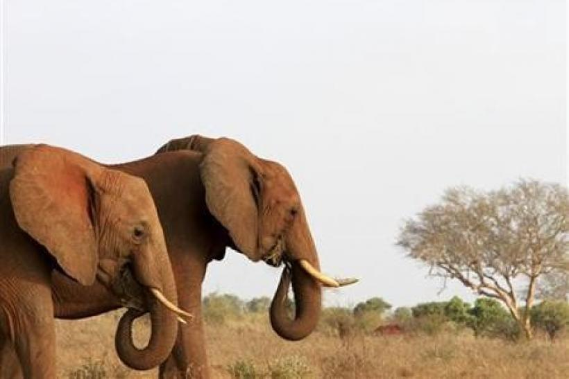 China consumerism latest threat to Africa's elephants: report