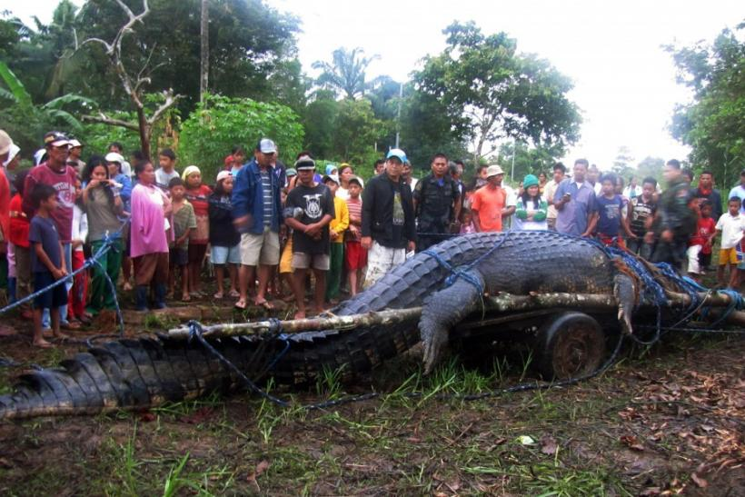 Residents look at a crocodile after it was caught in southern Philippines