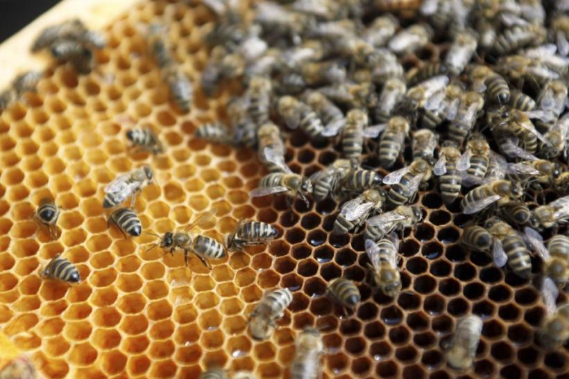 Pesticides Crashes Bee Hives Population