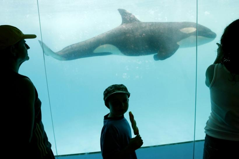 Visitors to Vallarta Adventure park in Nuevo Vallarta in Mexico watch month-old orphan killer whale Pascuala