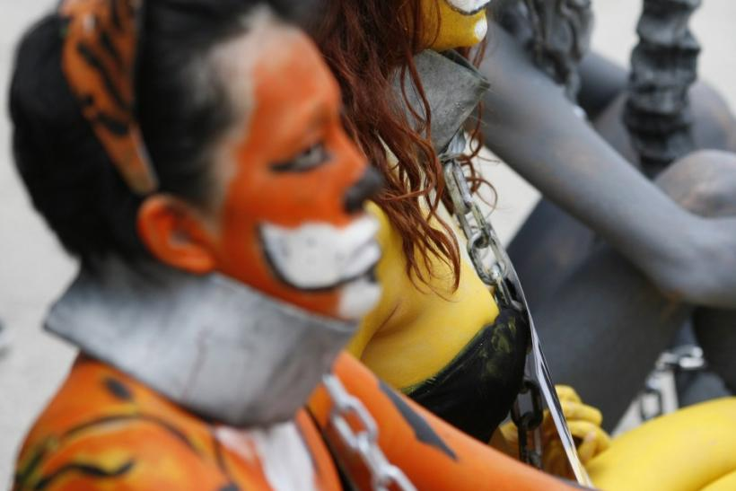 Members of animal rights organization Anima Naturalis, in body paint and dressed as a chained tiger, a lion and an elephant protest against the use of animals in circuses outside the Mexican Senate in Mexico City